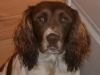 Molly Dog Aquasource:- Office Manager